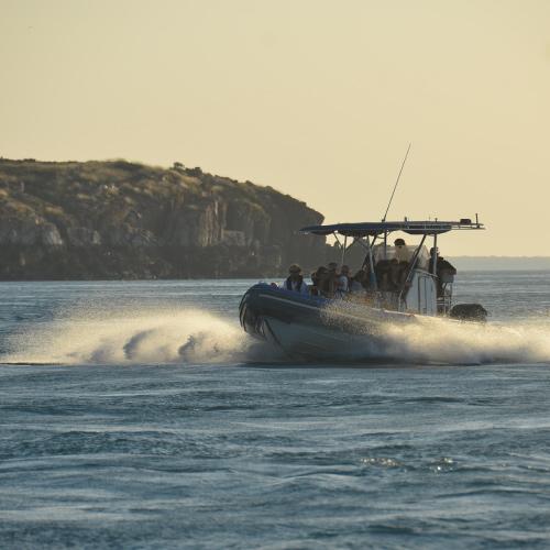 cygnet-bay-sea-safari